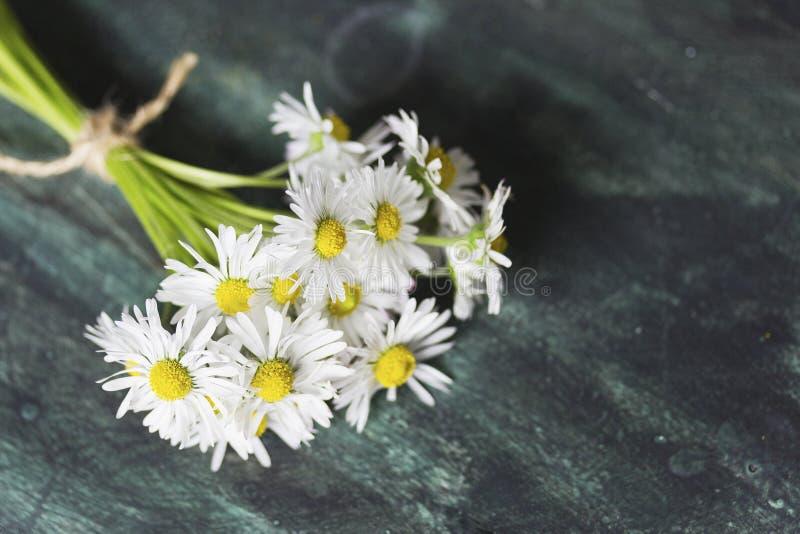 mot bl? tusensk?na blommar skyyellow fotografering för bildbyråer