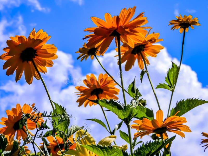 mot blue blommar skyyellow royaltyfria bilder