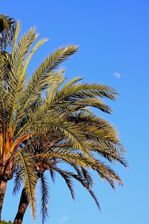 mot blue gömma i handflatan skyspain trees royaltyfria bilder