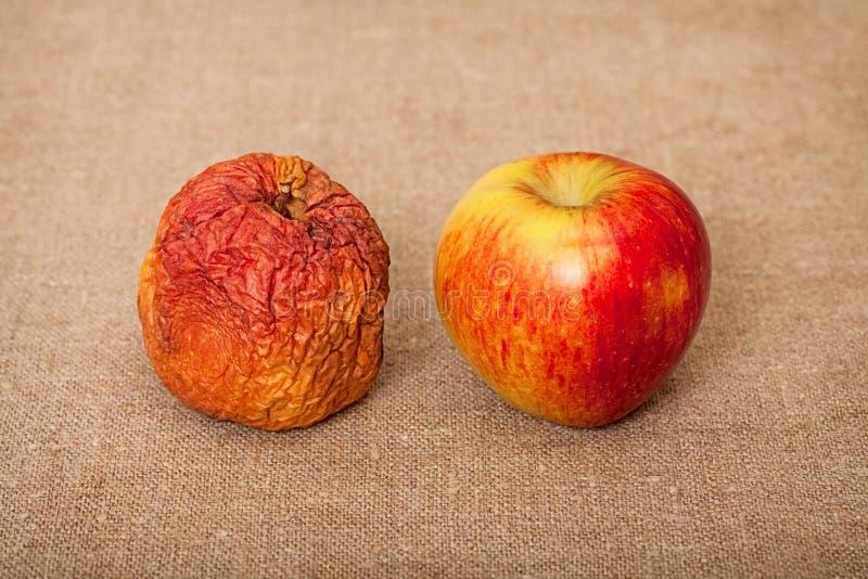 mot dålig kanfasfrukt goda två för äpplen royaltyfria foton