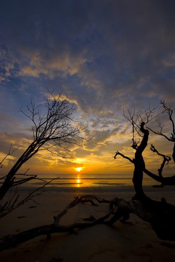 mot död dramatisk soluppgång för filialer royaltyfri foto