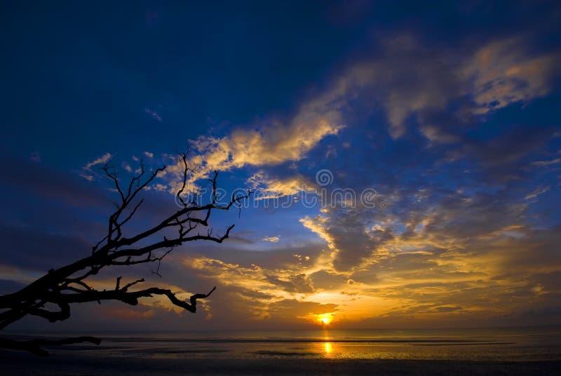mot död dramatisk soluppgång för filialer arkivbilder