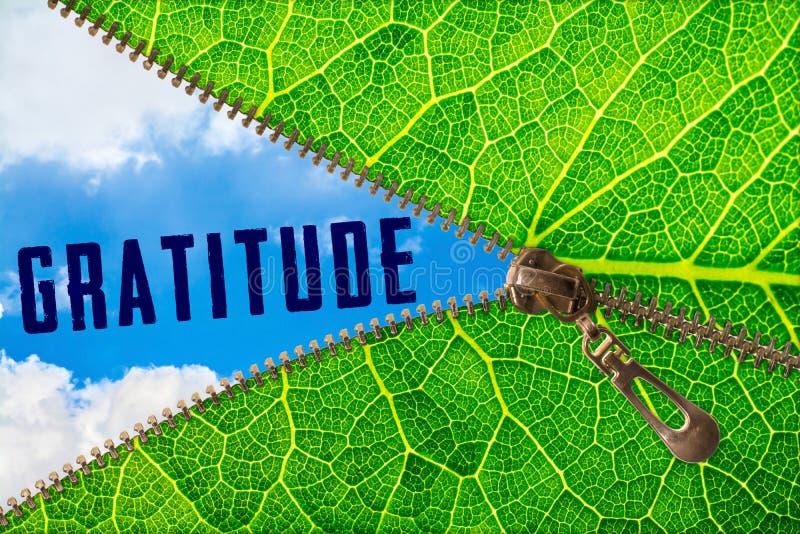 Mot de gratitude sous la feuille de tirette image libre de droits