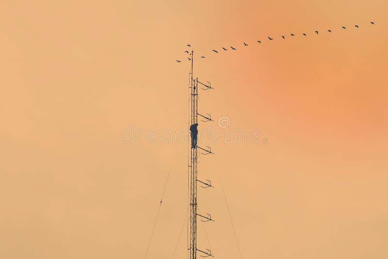 mot den blåa kommunikationsskyen för antenner royaltyfria bilder