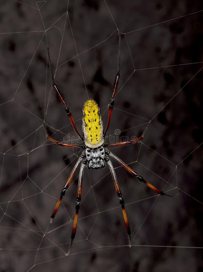 mot rengöringsduk för spindel för orb för bakgrundsblack guld- royaltyfria bilder