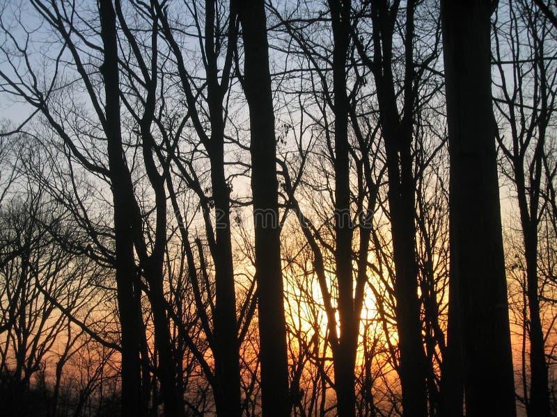 mot skogsoluppgångtrees arkivbild