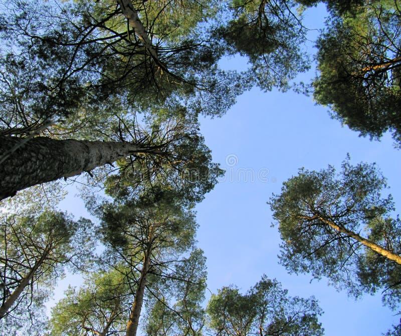 mot trees för blå sky arkivbild