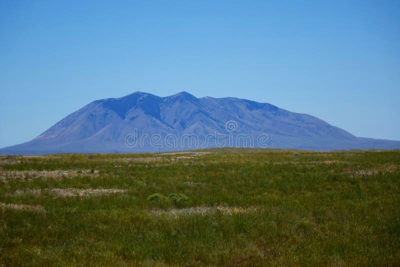 Mota meridional - Idaho foto de archivo libre de regalías