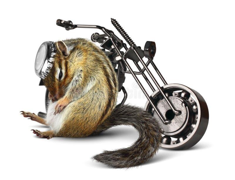 Motard dr le de tamia avec la moto photo stock image du - Image drole de motard ...