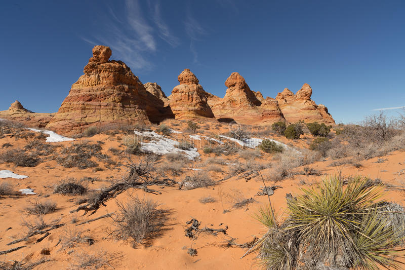 Motas del sur del coyote, monumento nacional de los acantilados bermellones fotografía de archivo