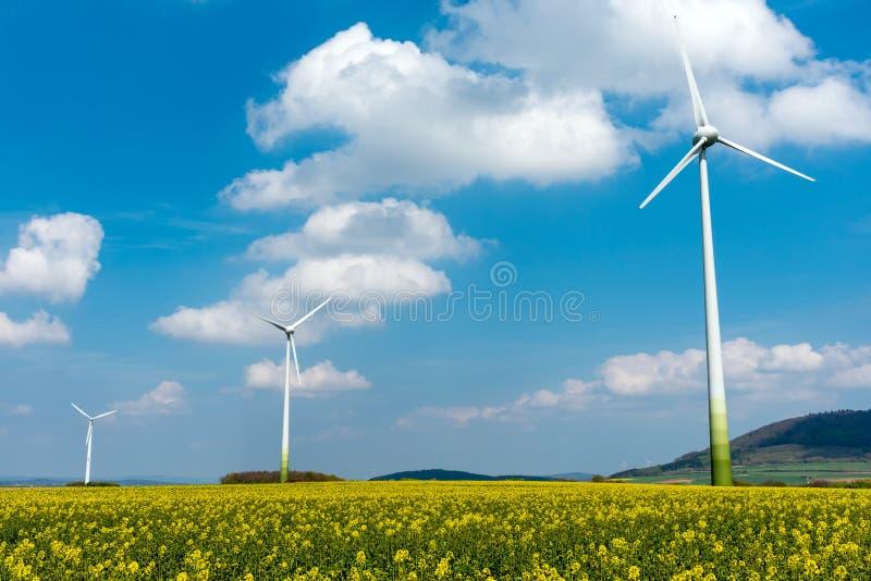 Moteurs de vent dans les domaines de la graine de colza image stock