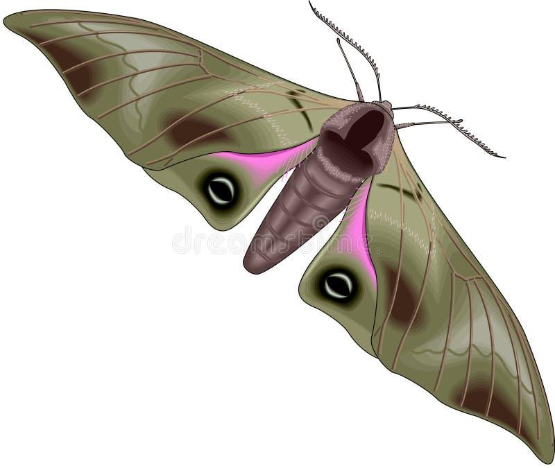 Moth royalty free illustration