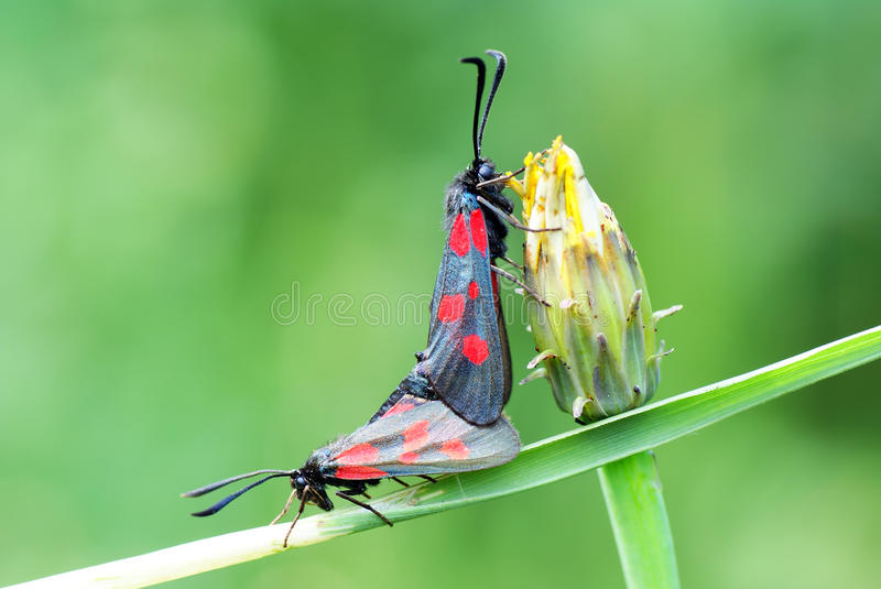 Download Moth stock image. Image of animals, insect, greenery - 12642461