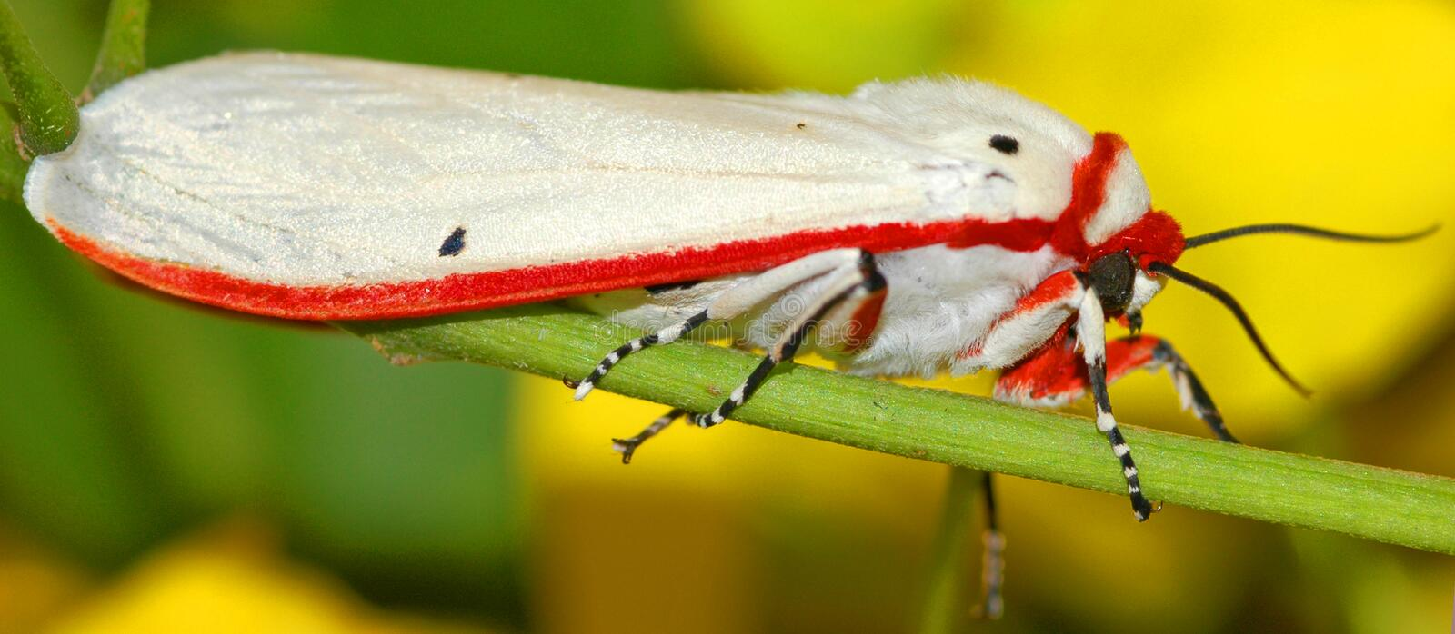 Moth Free Stock Images