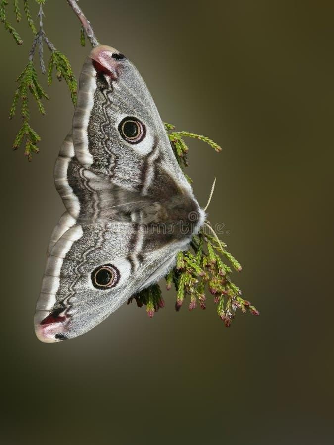 Free Moth Stock Image - 23016201