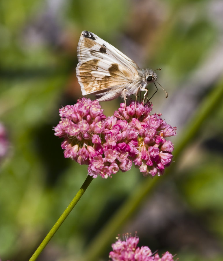 Download Moth on blooming flower stock image. Image of animal, green - 6273403