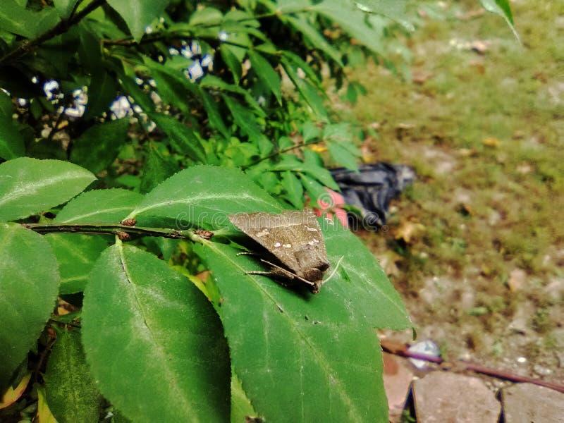 Moth on a green leaf stock photos