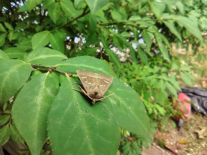 Moth on a green leaf stock photo