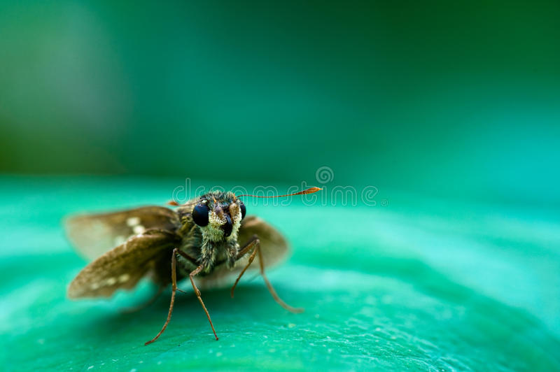 Download Moth on the leaf stock image. Image of ecosystem, macro - 24379975