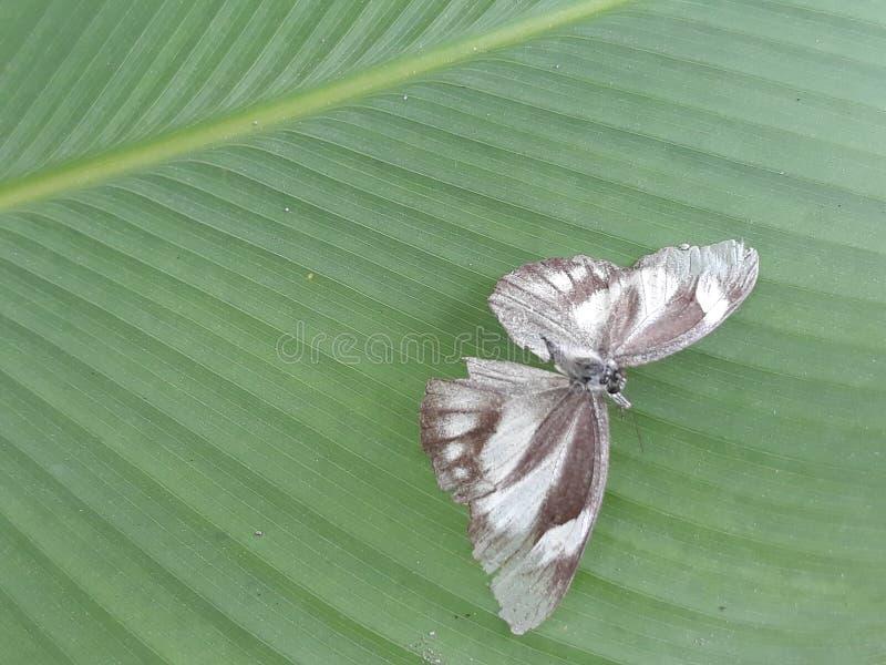 Moth on a leaf stock photos