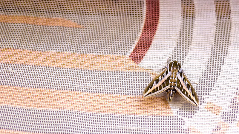 Moth stock photography