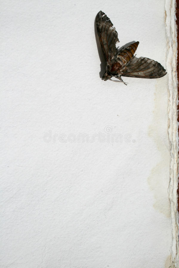 Download Moth On Old Paper stock image. Image of torn, handmade - 10694421
