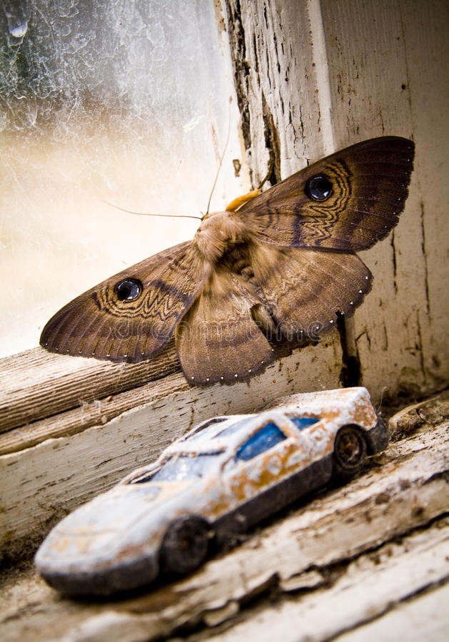 Moth on Window Ledge. Australian moth shows off its defense mechanism - 'eyes' on the back of its wings stock image