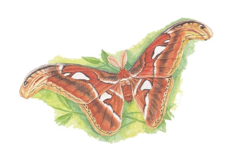 Moth1 stock photo