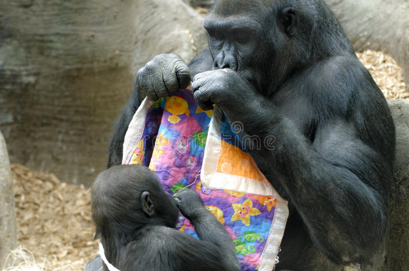 Download Mother and Baby Gorilla stock image. Image of mother - 31174219