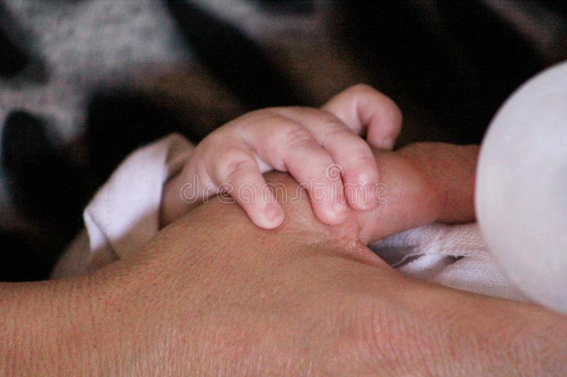 Mother and baby hands. Small baby hand is holding a mother hand while feeding it with a bottle. stock image