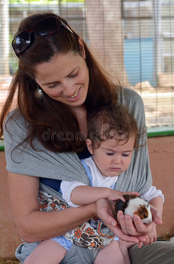 Mother and baby petting Guinea pig cub royalty free stock images