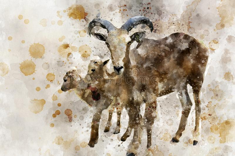 Mother barbary sheep with with babies, digital watercolor painting. Mother barbary sheep with with babies with watercolor dropped, digital watercolor painting stock illustration
