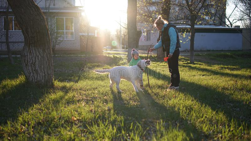 Mother and boy with dog walking in autumn urban park with sun on the background royalty free stock photography