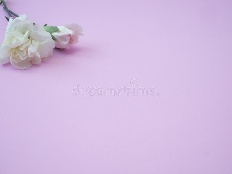 Mother' cartão do dia de s, cravo cor-de-rosa bonito foto de stock royalty free