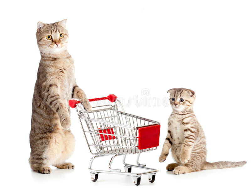 Mother cat with shopping cart and kitten. On white studio shot stock image