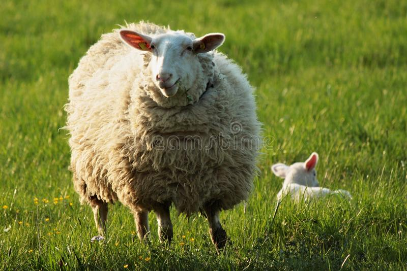 Download Mother and child stock photo. Image of farming, field - 23178084