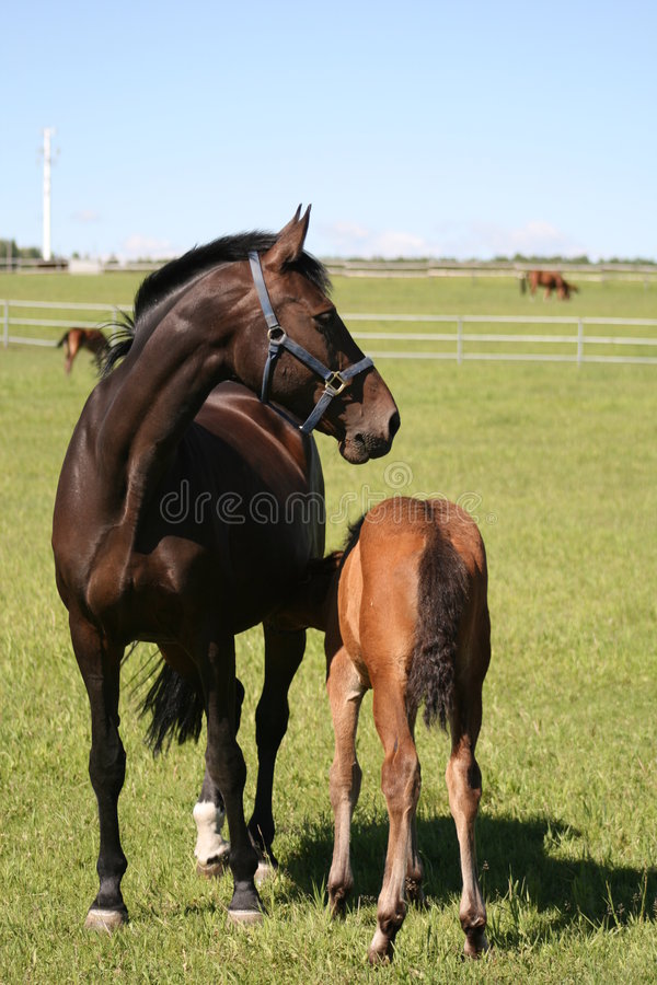 Download Mother and Child stock photo. Image of mare, jumper, rural - 5649156