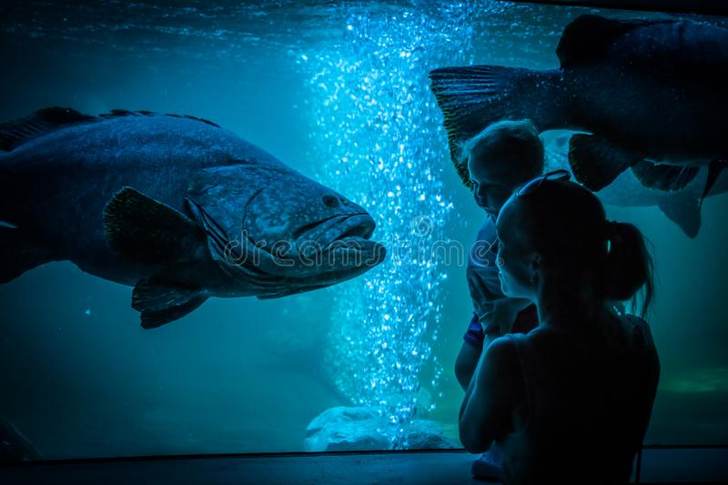 Mother child family leisure activities in public aquarium. Family Mother child leisure activities in public aquarium stock images
