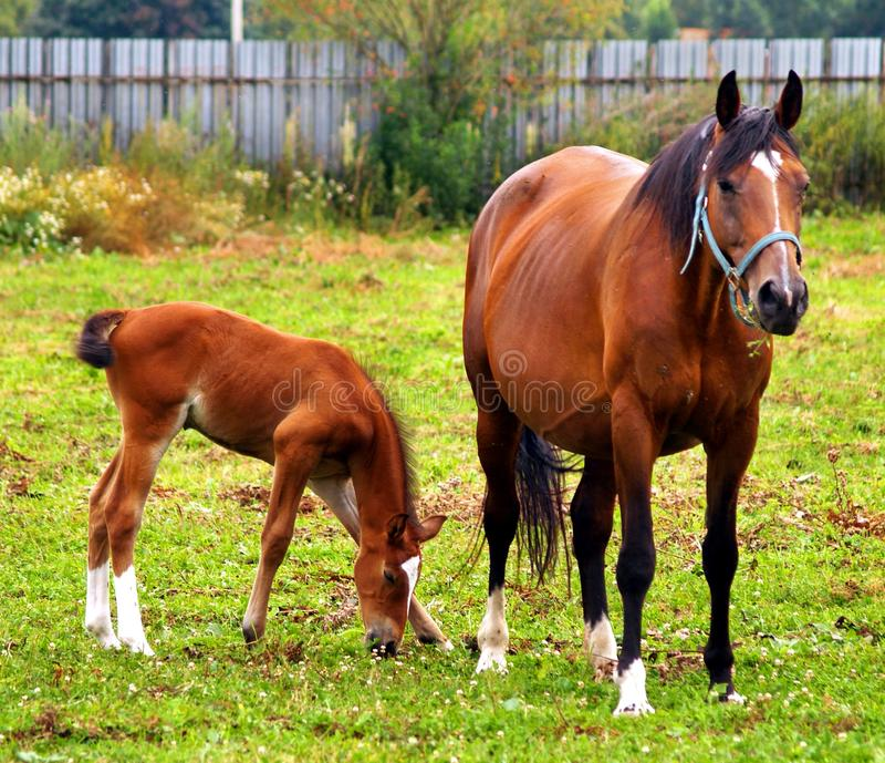 Mother & child grazing stock photo
