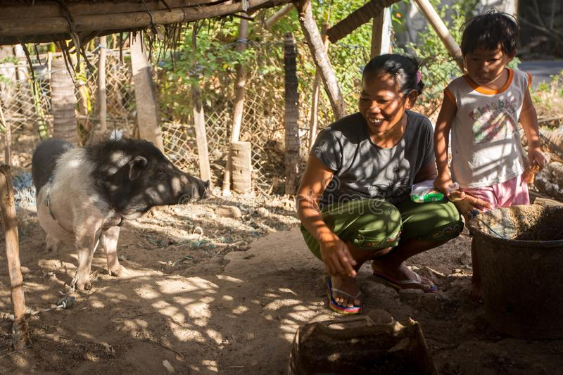 Mother and child living with a domestic pig under basic shelter. stock images