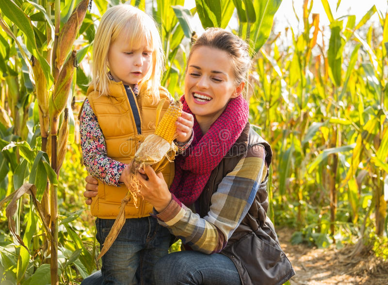 Mother and child shucking corn in cornfield royalty free stock photography