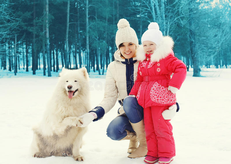 Mother and child with white Samoyed dog in winter day stock photos