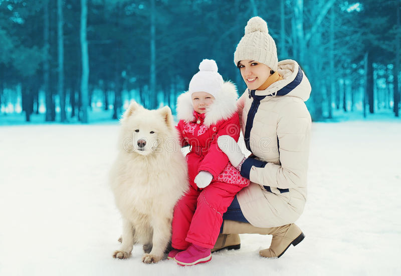 Mother and child with white Samoyed dog in winter stock photos