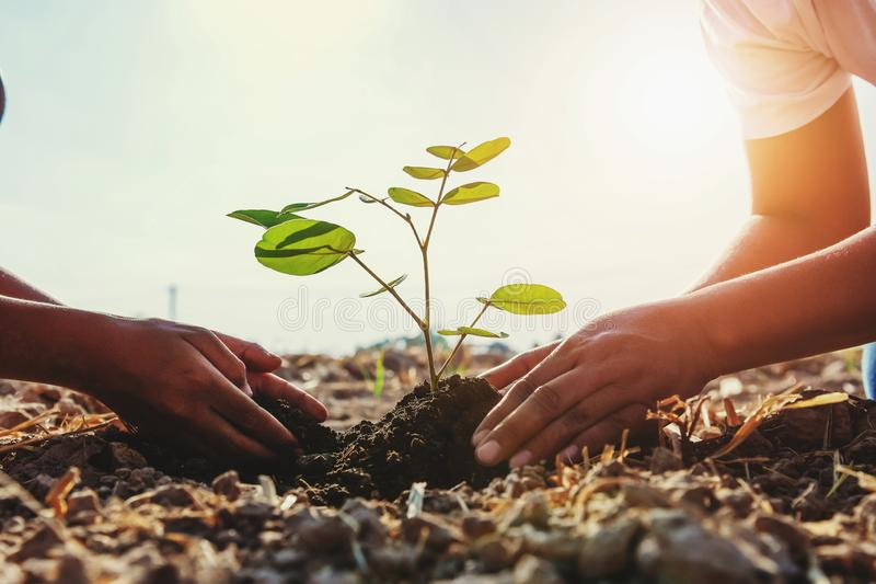 Mother and children helping planting young tree. Concept green world royalty free stock photo