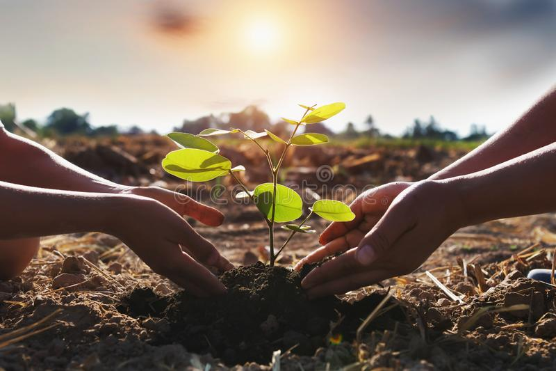 Mother and children helping planting young tree. Concept green world royalty free stock photography