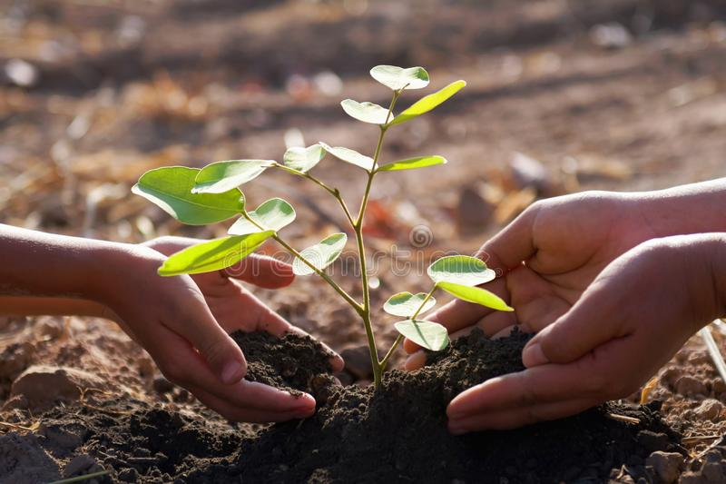 Mother and children helping planting young tree. Concept green world stock photography