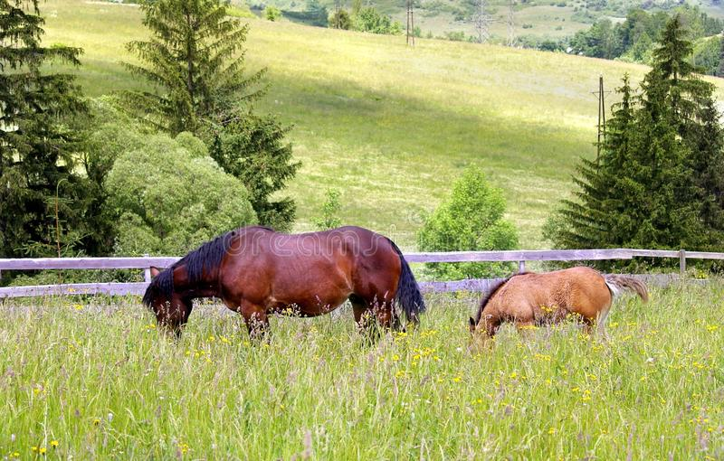Mother and chlid grazing royalty free stock photos