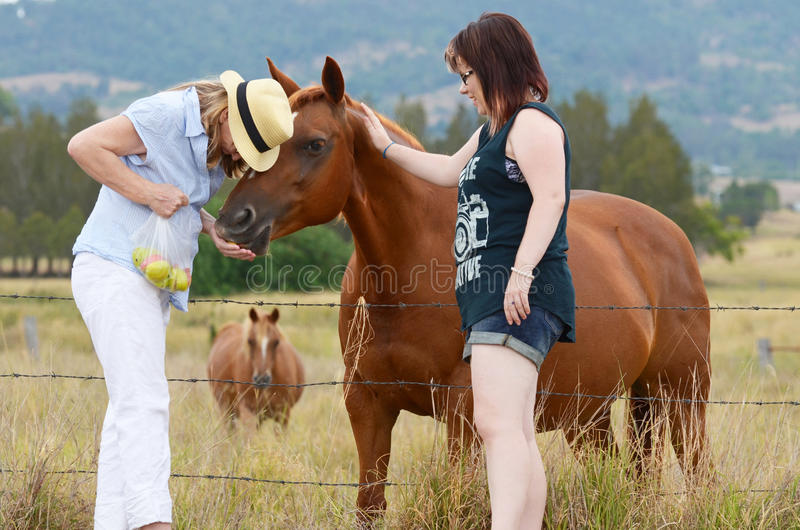 Mother & daughter enjoying day together feeding horses in country stock image