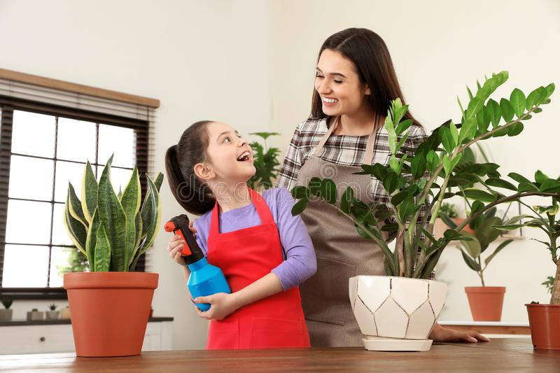 Mother and daughter taking care of plant. At home royalty free stock image