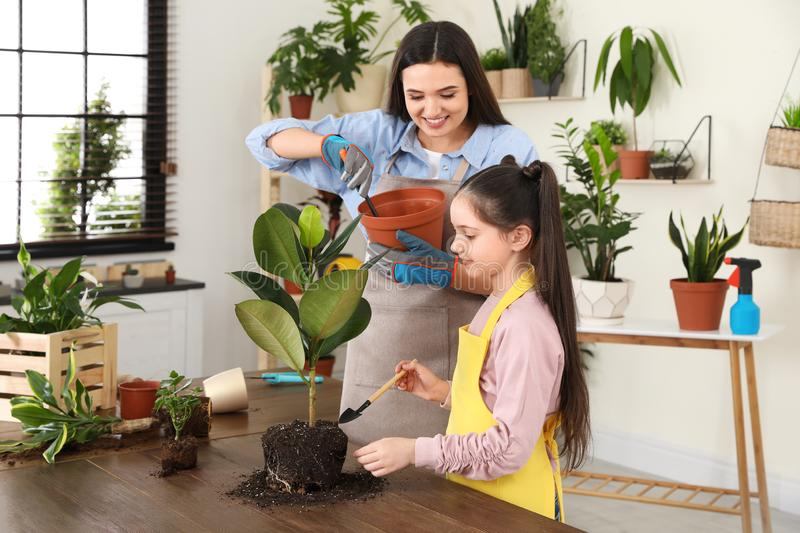 Mother and daughter taking care of plant. At home stock images